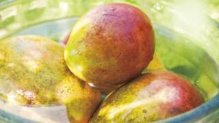 アップルマンゴー 妖艶な沖縄フルーツ
