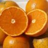 タンカン 沖縄産オレンジ