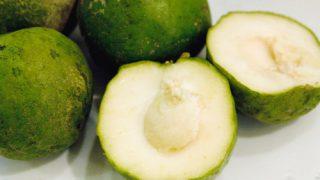 ホワイトサポテ / 南米原産の沖縄果実