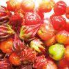 アセロラ / 赤くて小さな沖縄果実