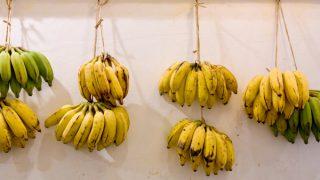 琉球もちっ娘(もちっこ)バナナ / 島バナナのニューウェーブ